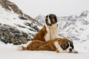 psy ratunkowe