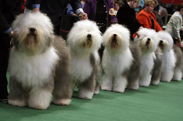wystawy dla psów